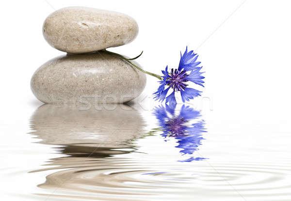 Zen saldo azul flores silvestres branco flores Foto stock © angelsimon