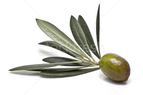 Groene olijfolie olijven bladeren geïsoleerd Stockfoto © angelsimon
