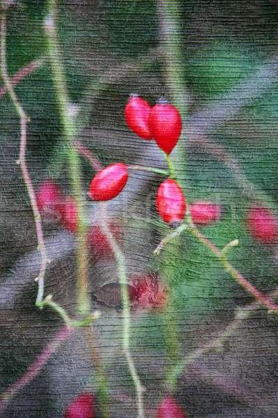 Doubler exposition floral objets jour lumière Photo stock © animagistr
