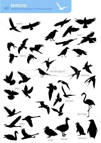 Stock photo: vector set: birds