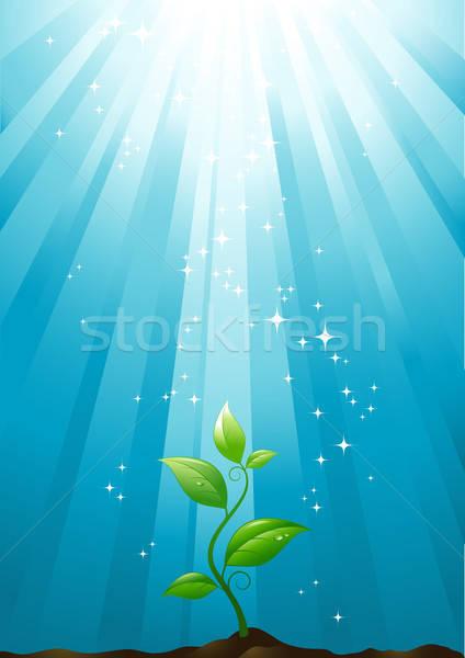 роста небольшой завода небе природы лист Сток-фото © Anja_Kaiser