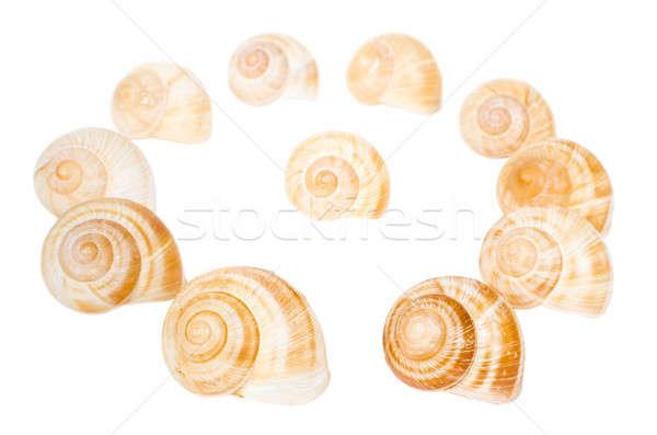 Daire spiral kabukları yalıtılmış beyaz su Stok fotoğraf © anmalkov