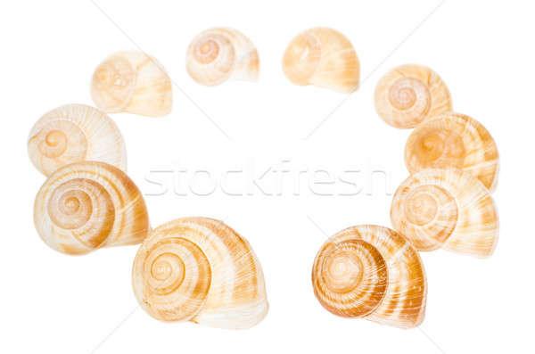 Círculo spiralis conchas isolado branco água Foto stock © anmalkov