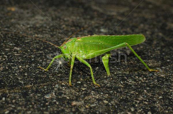 Yumurta yeşil doğa uçmak böcek Stok fotoğraf © anmalkov