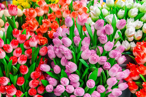 Traditional wooden colorful tulips at souvenir shop in Amsterdam Stock photo © anmalkov