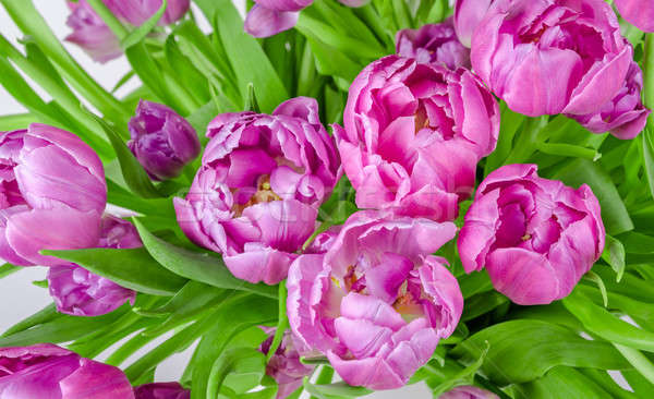 Bouquet of pink tulips in flowerpot Stock photo © anmalkov