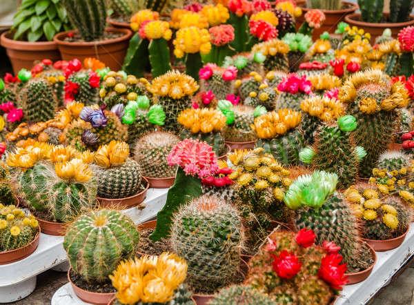 Colorido mercado planta flor Foto stock © anmalkov