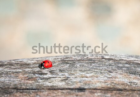 Ladybug walking along weathered old wooden board Stock photo © anmalkov