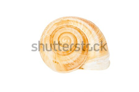 Beige spiral shell isolated Stock photo © anmalkov