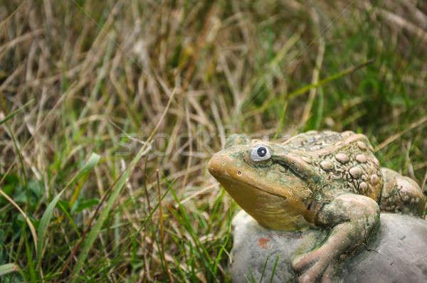 Pedra sapo grama olhando câmera decorativo Foto stock © anmalkov