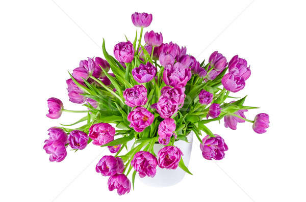 Bouquet of pink tulips in flowerpot isolated on white Stock photo © anmalkov