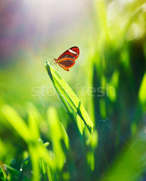 Beautiful butterfly on the field Stock photo © Anna_Om