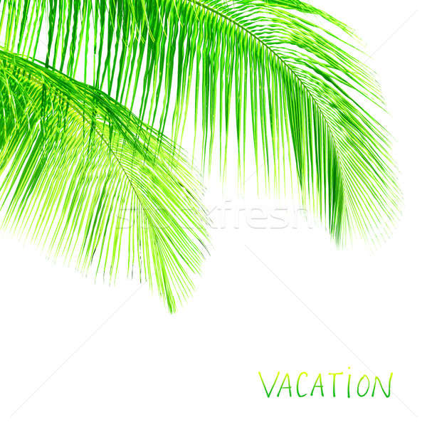 Palm tree leaves border Stock photo © Anna_Om