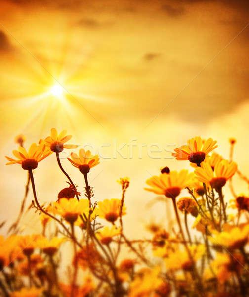 花 日没 黄色 新鮮な デイジーチェーン ストックフォト © Anna_Om