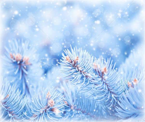 Fir tree background Stock photo © Anna_Om