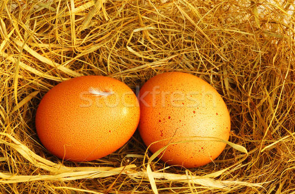 Two golden eggs Stock photo © Anna_Om