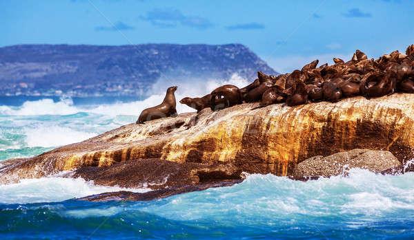 Vad dél-afrikai sok aranyos tenger fekszik Stock fotó © Anna_Om