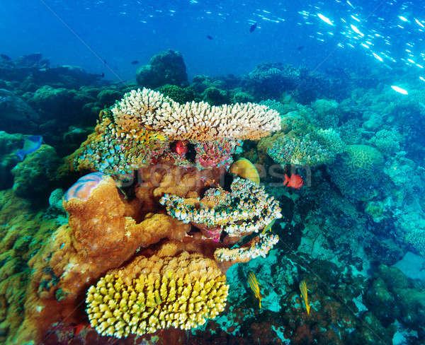 Beautiful marine life Stock photo © Anna_Om