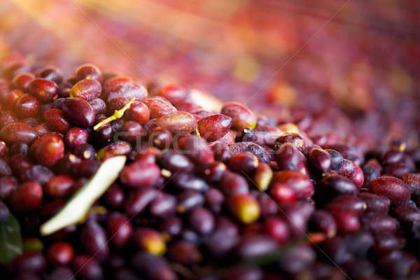 Siyah zeytin akdeniz meyve lezzetli sağlıklı beslenme Stok fotoğraf © Anna_Om
