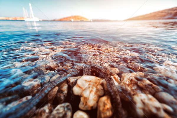 Polpo mare bella subacquea natura fondo Foto d'archivio © Anna_Om