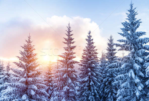 Beautiful winter forest Stock photo © Anna_Om