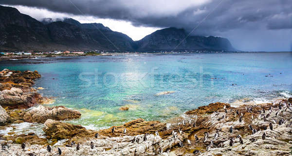 Beautiful landscape with wild penguins Stock photo © Anna_Om