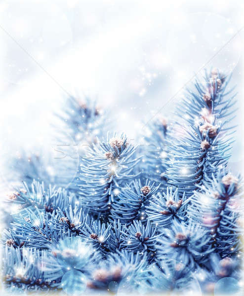 Snowy fir tree background Stock photo © Anna_Om