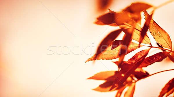Sonbahar yaprakları sınır kuru bej eski grunge Stok fotoğraf © Anna_Om