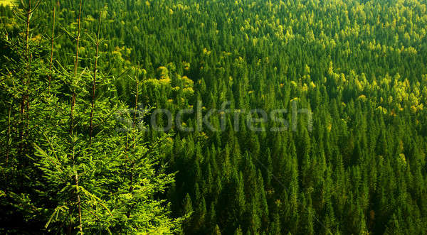 Green forest background Stock photo © Anna_Om