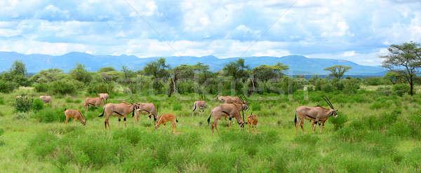 アフリカ ケニア 春 フィールド 青 ストックフォト © Anna_Om