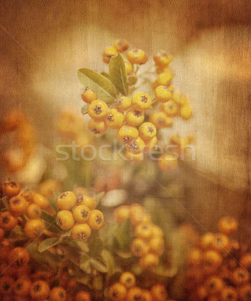 Rowanberry grunge background Stock photo © Anna_Om