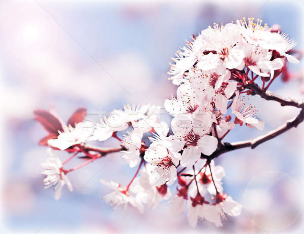 Blooming tree at spring  Stock photo © Anna_Om