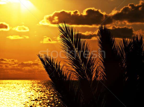 Stock fotó: Pálmafa · sziluett · naplemente · tengerpart · gyönyörű · nyáridő