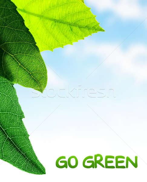 Yeşil yaprakları sınır taze bitki mavi gökyüzü soyut Stok fotoğraf © Anna_Om