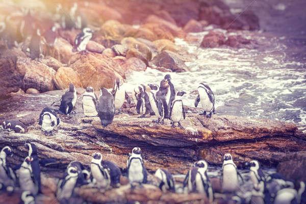 Big family of penguins Stock photo © Anna_Om