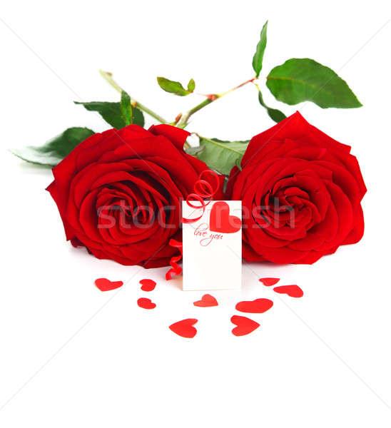 Boş kart güller kırmızı kalp yalıtılmış beyaz Stok fotoğraf © Anna_Om