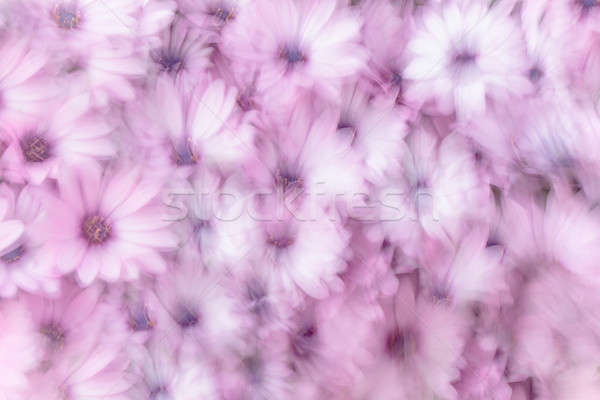 Dreamy background of flowers Stock photo © Anna_Om