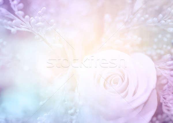 Rüya gibi güzel fotoğraf nazik gül Stok fotoğraf © Anna_Om