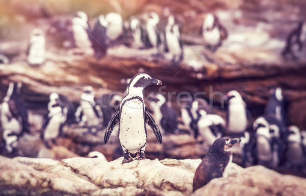 Big family of penguins  Stock photo © Anna_Om