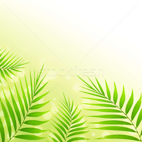 Palmbladeren foto abstract grens mooie Stockfoto © Anna_Om