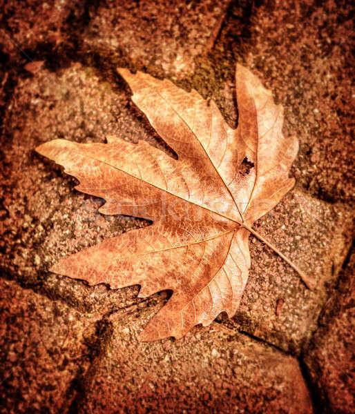 Maple Leaf кирпичная стена высушите коричневый красивой аннотация Сток-фото © Anna_Om