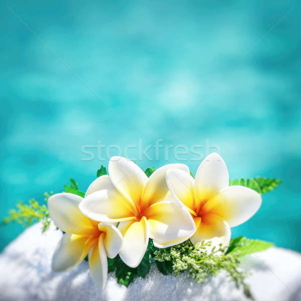 Beautiful frangipani flowers Stock photo © Anna_Om