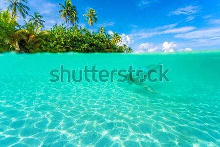 женщины дайвинг экзотический острове плаванию прозрачный Сток-фото © Anna_Om