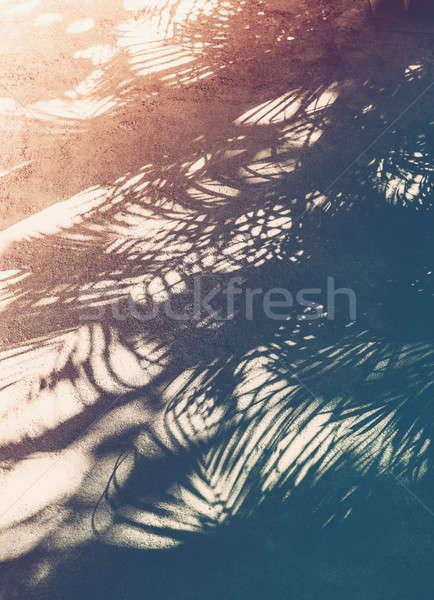 Vintage palma tropicales hermosa estilo palmera Foto stock © Anna_Om