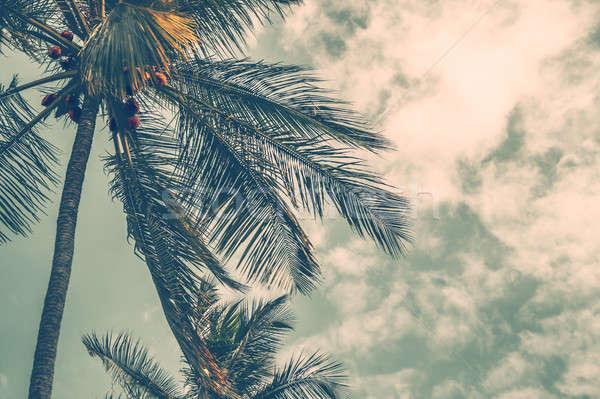 Palm tree Stock photo © Anna_Om