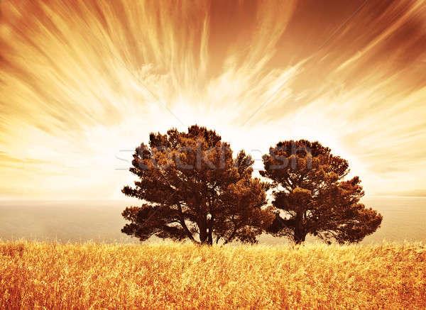 одиноко старые деревья Гранж осень Сток-фото © Anna_Om