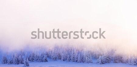 Beautiful winter forest border Stock photo © Anna_Om