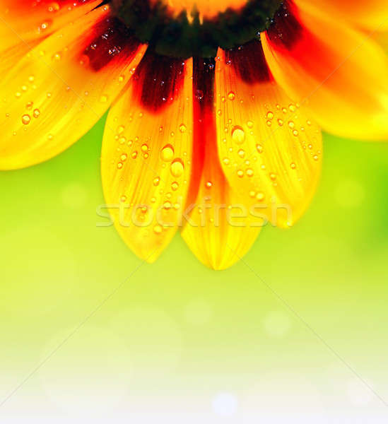 Stock photo: Abstract flower colorful floral background