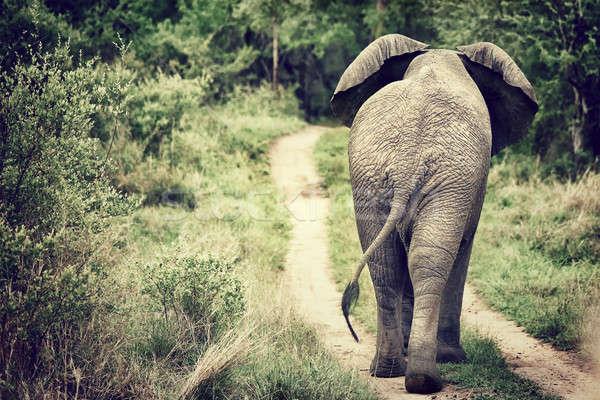 Stock fotó: Elefánt · sétál · vad · hátsó · nézet · nagy · park