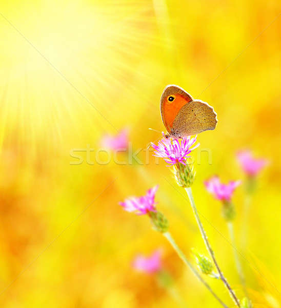Beautiful yellow butterfly Stock photo © Anna_Om